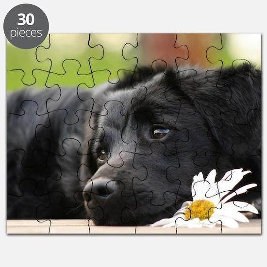 Black Lab Puzzle