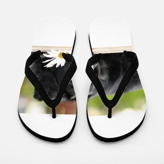 Black Lab Flip Flops