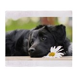 Black lab Fleece Blankets
