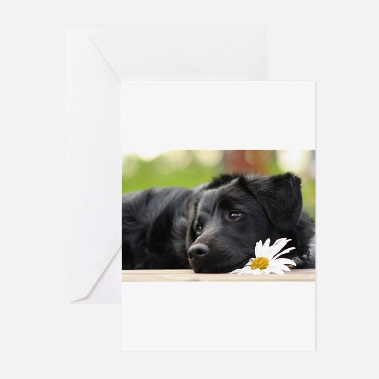 Black Lab Greeting Cards