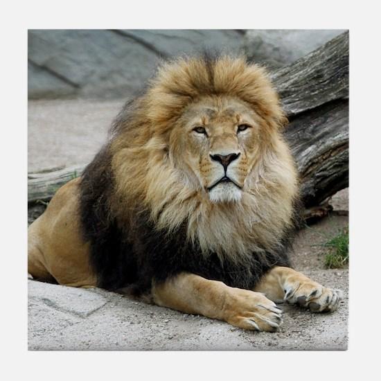 Lion_2014_1001 Tile Coaster