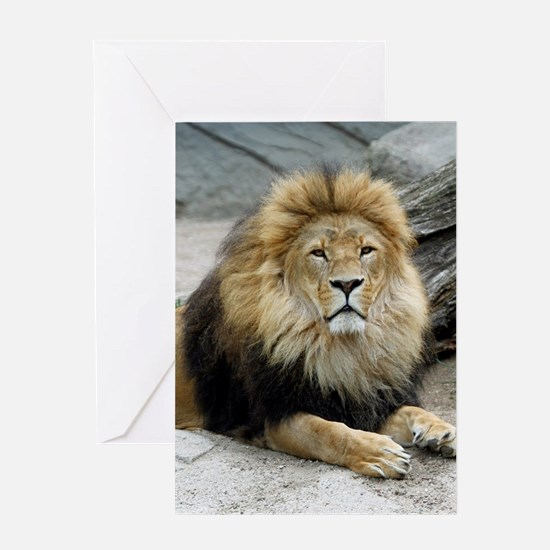 Lion_2014_1001 Greeting Cards