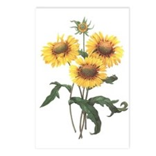 Redoute Sunflowers Postcards (8)