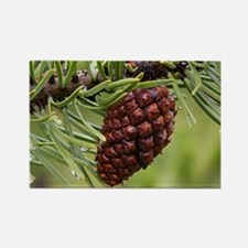 Pine Cone Magnets