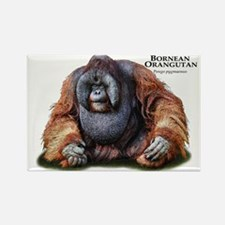 Bornean Orangutan Rectangle Magnet
