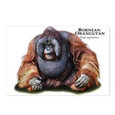 Bornean Orangutan Postcards (Package of 8)
