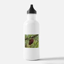 Pine Cone Water Bottle