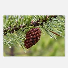 Pine Cone Postcards (Package of 8)