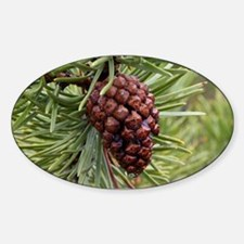 Pine Cone Decal