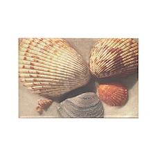 Seashells Rectangle Magnet