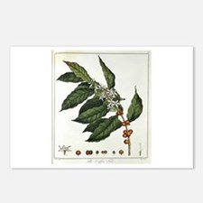 Coffee Botanical Print Postcards (Package of 8)