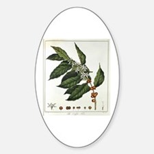 Coffee Botanical Print Oval Decal