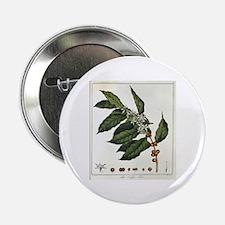 Coffee Botanical Print Button