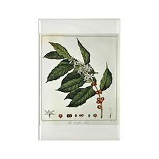 Coffee Botanical Print Rectangle Magnet