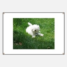 bolognese laying in grass Banner