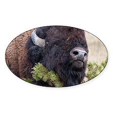 Christmas Bison Decal