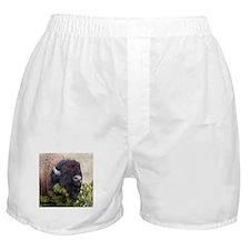 Christmas Bison Boxer Shorts