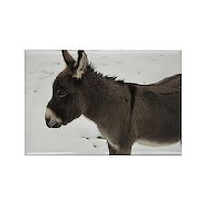 Miniature Donkey III Magnets