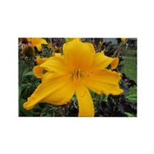 Jersey Spider Daylily Magnets