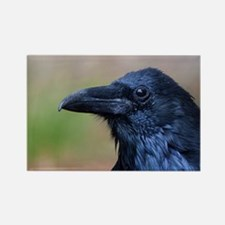 Portrait of a Raven Magnets