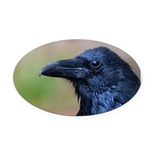 Portrait of a Raven Oval Car Magnet