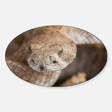 Rattlesnake Decal