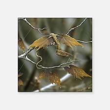 "Maple Leaf Earth Dragon Square Sticker 3"" x 3"""
