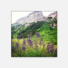 "Crested Butte Wildflowers - Square Sticker 3"" x 3"""