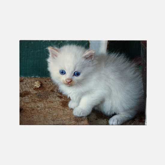 White Kitten Magnets