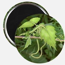 Lettuce Leaf Dragon Magnet
