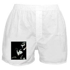 IN A POSITION TO KNOW Boxer Shorts