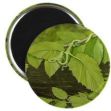 River Birch Leaf Dragon Magnet