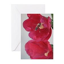 Honeybee Gift Cards (Pk of 10)