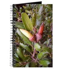 Live Oak Acorns Journal