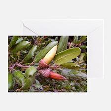 Live Oak Acorns Greeting Cards (6)