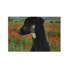 Sloughi in Red Poppy Field Rectangle Magnet