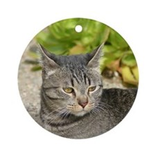 Cat with an attitude Ornament (Round)