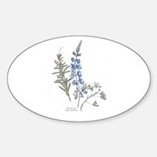 Silver Dune Lupin (Lupinus chamissonis) Decal