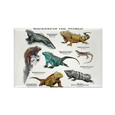 Iguanas of the World Rectangle Magnet