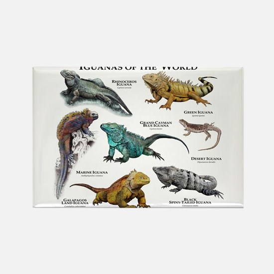 Iguanas of the World Rectangle Magnet