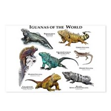 Iguanas of the World Postcards (Package of 8)