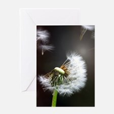 Dandelion blowing Greeting Cards