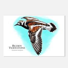 Ruddy Turnstone Postcards (Package of 8)