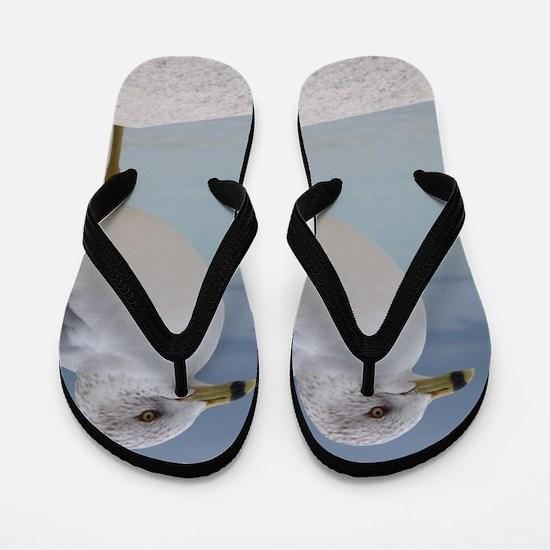 Seagull Flip Flops