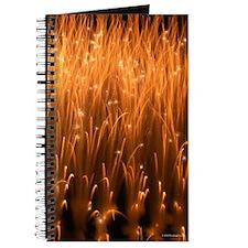 Willow Mines Fireworks Journal