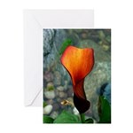 Red Calla Lily Greeting Cards (10)