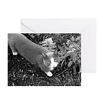 Little Grey Cat Greeting Cards (6)