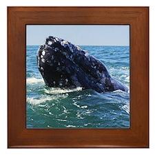 Gray Whale 2 Framed Tile