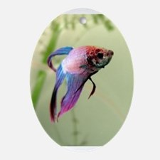 Beta Fish Oval Ornament