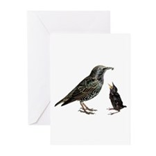 Starling Mom & Baby Greeting Cards (Pk of 10)